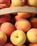 Peach Basket Royalty Free Stock Photo