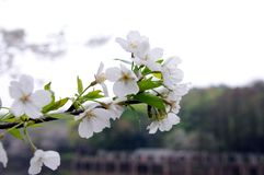 Beautiful and elegant flower royalty free stock photography