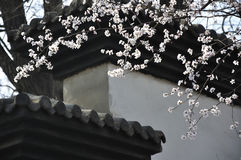 Peach blossom and architecture Royalty Free Stock Photo