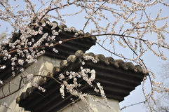 Peach blossom and architecture Stock Photo