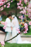 Peach blossom with couple lover. In kiss Stock Photos