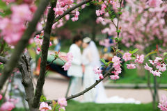Peach blossom with couple lover. In kiss Royalty Free Stock Photos