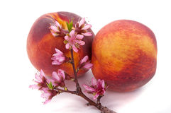 Peach Blossom and Fruit Stock Photo