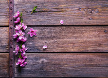 Peach blossom on old wooden background. Fruit flowers. stock photos