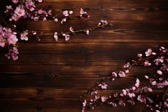 Peach blossom on old wooden background. Fruit flowers royalty free stock image