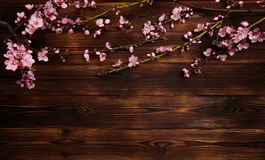 Peach blossom on old wooden background. Fruit flowers royalty free stock images