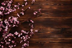 Peach blossom on old wooden background. Fruit flowers stock images