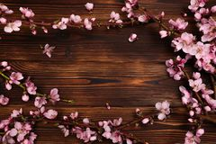 Peach blossom on old wooden background. Fruit flowers stock photography