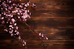 Peach blossom on old wooden background. Fruit flowers royalty free stock photography