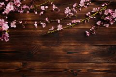 Peach blossom on old wooden background. Fruit flowers stock image