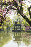 Peach blossom and pavilion Royalty Free Stock Image