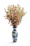 Peach Blossom in Vase Royalty Free Stock Photo