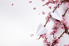 Peach blossom on white background and paper plane stock image