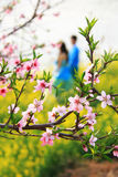 Peach blossoms with loving couple. In spring royalty free stock photo