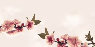 Peach Blossoms  with space for your texts. Peach Blossoms with space for your texts Royalty Free Stock Photography