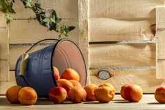 Peach in bucket wood background. Farm still life food. Summer eat diet. Peach in blue bucket Stock Images