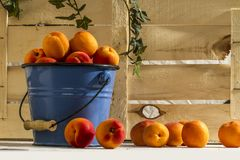 Peach in bucket wood background. Farm still life food. Summer eat diet. Peach in blue bucket. Seasoned rustic homework Royalty Free Stock Images