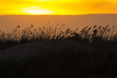 Peach Clouds behind Blowing Dune Reeds at Sunset Stock Photos