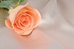 Peach Colored Rose on Beige Satin Background Stock Photos