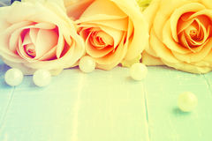 Peach colored rose Stock Photos