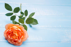 Peach colored rose on the table Stock Image