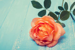 Peach colored rose on the table Stock Photo