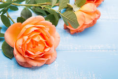 Peach colored rose on the table Stock Photos