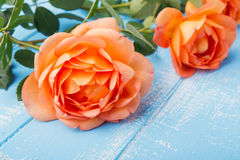 Peach colored roses on the table Stock Photography