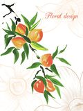 Peach design card Royalty Free Stock Photography