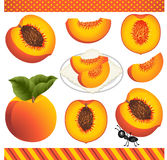 Peach Digital Clipart Royalty Free Stock Photos