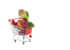Peach-Faced Lovebird Perched on Shopping Cart. Filled with Fresh Fruit and Vegetables Isolated on White Royalty Free Stock Photo