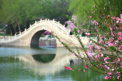 Peach flowers and arch bridge. The spring peach flowers near the lake and chinese traditional arch bridge in Longtanhu park at Beijing china Royalty Free Stock Photo