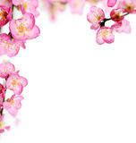 Peach flowers frame Stock Image
