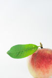 Peach with green leaf Stock Photo