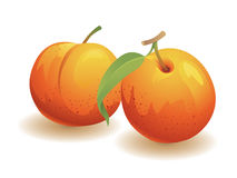 Peach Fruit. Realistic vector illustration of two peaches Stock Images