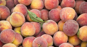 Peach fruit. Many sweet peach fruits as a background Royalty Free Stock Photos