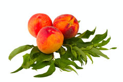 Peach fruits Stock Images