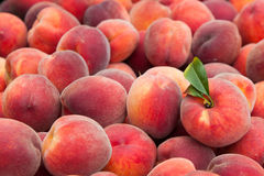 Peach fruits Stock Photography