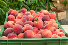 Peach fruits Royalty Free Stock Image