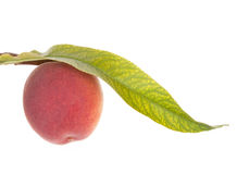 Peach fruits with leaf. Solated on white Stock Photography