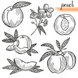 Peach fruits set Royalty Free Stock Photography