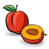 Peach fruits sketch drawing  set Stock Photos