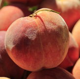 Peach fuzz. Fresh perfect shaped peach with peach fuzz Stock Photography