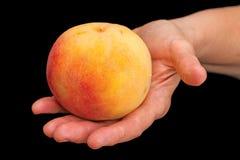 Peach in hand on black Stock Photos