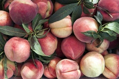 Peach Harvest Background Royalty Free Stock Photography