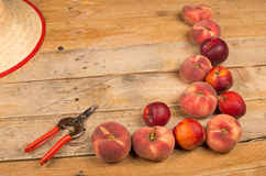 Peach harvest background Royalty Free Stock Photo