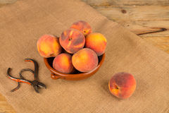 Peach harvest Royalty Free Stock Image