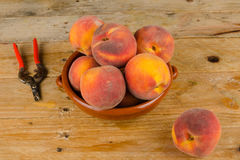 Peach harvest Stock Photography