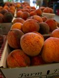 Peach Harvest. Peaches bring late summer sweetness to New England Stock Image