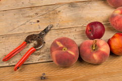 Peach harvest still life Stock Photography